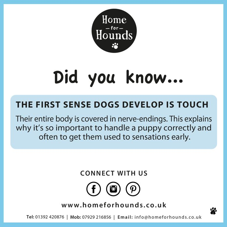 Did you know, the first sense dogs develop is touch? #factoftheday #knowyourdog #trainyourbrain #doglove #dogdaycare #homeforhounds