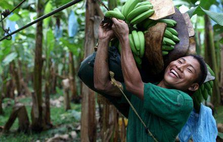 Fairtrade bananer