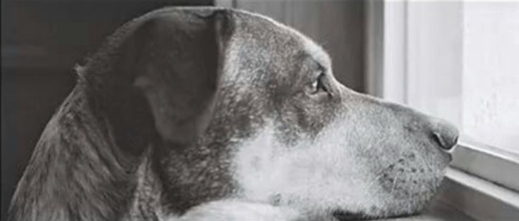 """Dedicado a todos los que tenemos un perro en casa: """"Poema de un perro"""" ❤️ #perro #perros #animales #animal #mascota #mascotas #cachorro #cachorros #foto #frases #poemas #poema #carta #cartas #emocionante #amantesdelosanimales #schanuzi"""