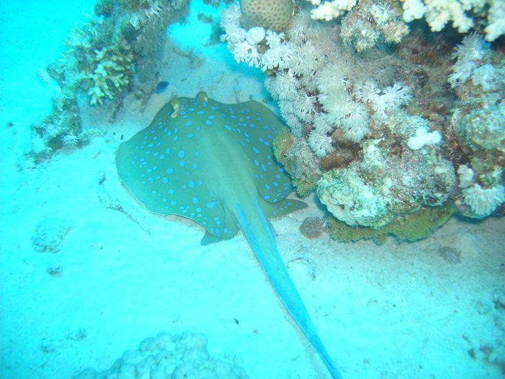 Plongée sous marine à Marseille ! #plongee #underwater #Marseille #diving
