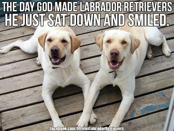 Labrador bambini ~ 29 best lab birthday images on pinterest doggies labrador