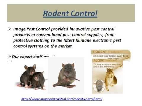 Rodent Control Services Bangalore