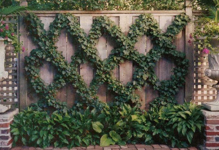 Ivy on diamond pattern wire trellis garden pinterest for Trellis made to order