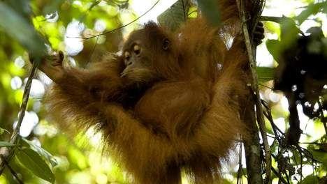 Dit zijn de meest zeldzame dieren ter wereld - Ecologie - De Morgen