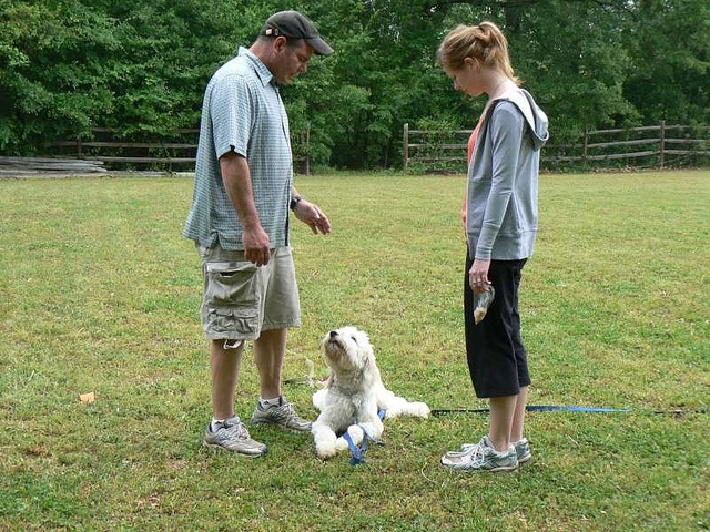 Dog Training In Charlotte has also been recognized on national TV Dog Training in Charlotte has regular appearances on local news networks. While other trainers come and go, Dog Training In Charlotte maintains a steady, growing, loyal client populati more no cost dog training articles http://FreeDogTraining.bestonlineproducts.net/