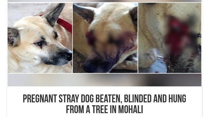 Petition · Honourable Prime Minister of India Shri Narendra Modi: Reinforce the Animal Law in India & Punish these 3 people for brutal killing of dog · Change.org