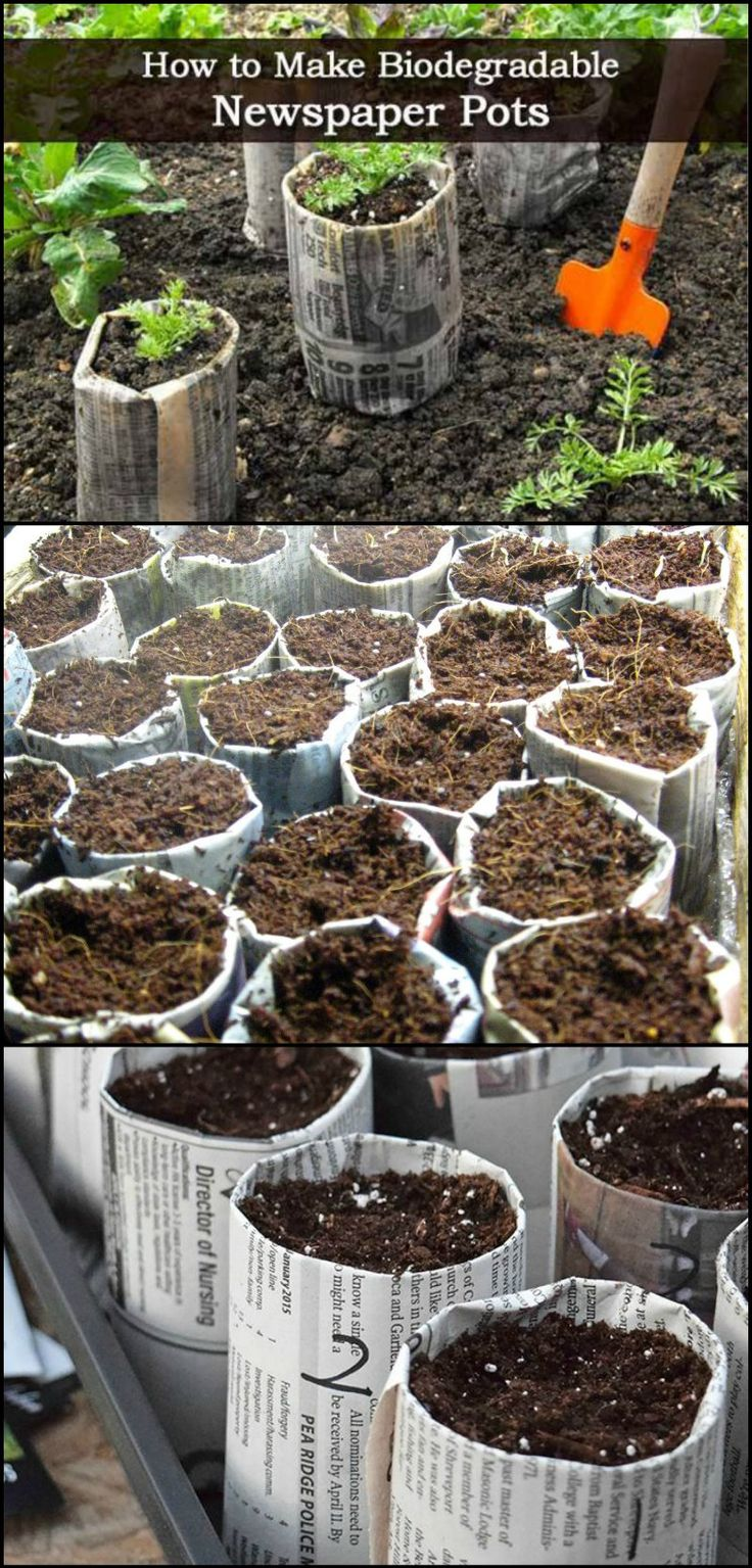 How To Make Biodegradable Newspaper Seedling Pots  Making seedling pots out newspaper is a great idea! It makes transplanting easier since you don't have to dig up your plants anymore. No more fear of damaging their roots! Read on to know how.