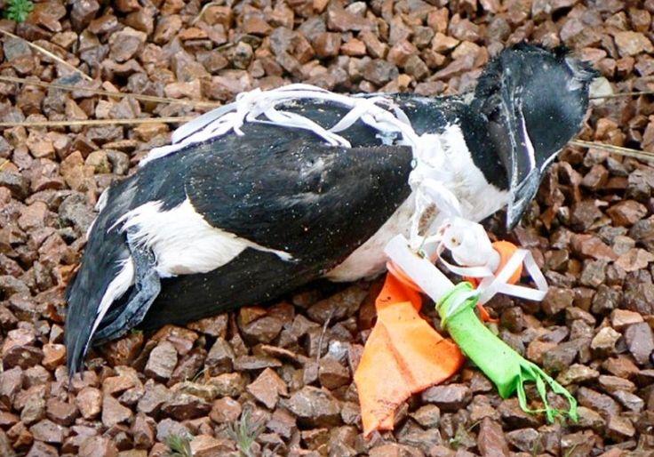 Os balões que largamos matam aves marinhas, tartarugas, cavalos e outros animais | UniPlanet