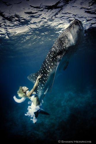 Con gli squali balena le modelle più coraggiose