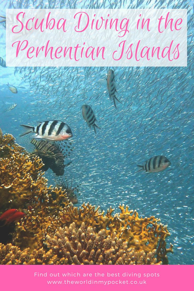 Diving in the Perhentian Islands | Perhentian Islands diving spots | Malaysia diving spots | Diving in Malaysia | Scuba diving in Malaysia | Where to dive in Malaysia | Where to dive in the Perhentian Islands | Scuba diving trips | Scuba diving in Asia | Scuba diving in Malaysia | PADI Malaysia