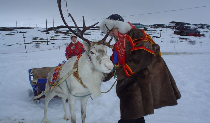 Reindeer sledding - Photo: Heidi Johansen/Visit Tromsø #tromsø #norway #reindeer #travel