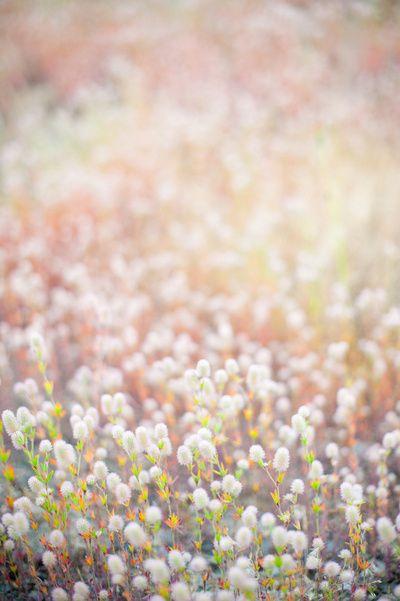 Zalando ❤ Flowers