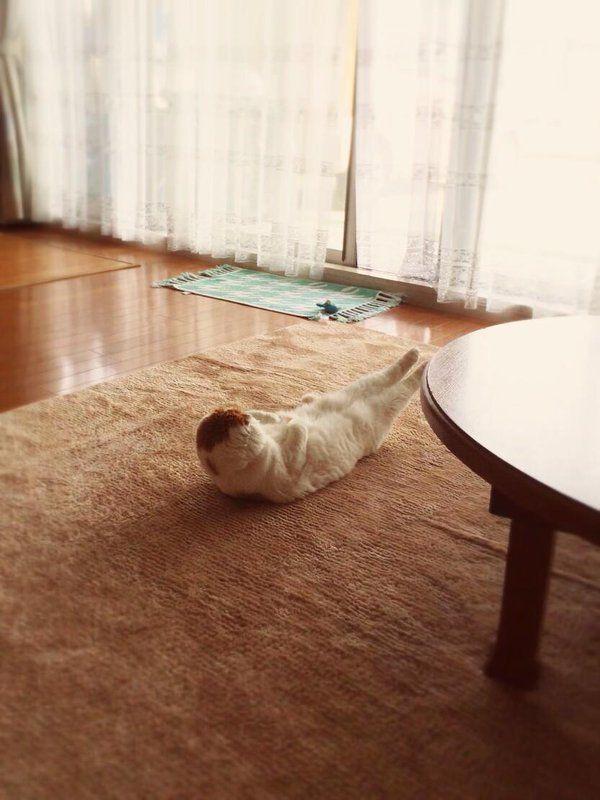 見てしまった…。||д゚*)ジー早朝のリビングで朝トレ中の努力家!? pic.twitter.com/VbhtCcyBUN