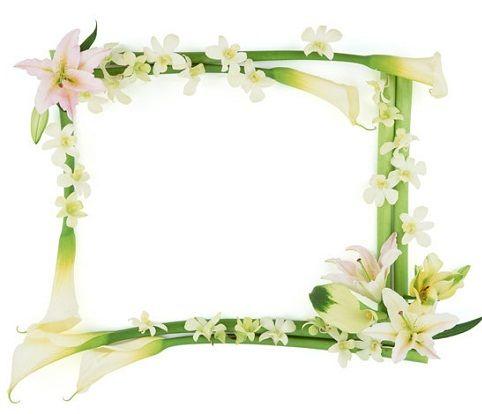 صور براويز خضراء اطارات خضراء مفرغة للكتابة صور بطاقات اخضر Funny Photo Frames Free Picture Frames Romantic Frame