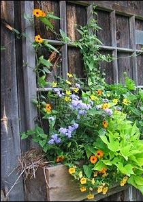 Window box with vines