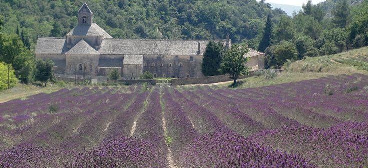 Lavendel Provence gilt als das Original! Kurz und Knapp alles zu Lavendel, Blüte, Blütezeit, Felder. Außerdem Reise Tipps für die Lavendelstrasse in Provence