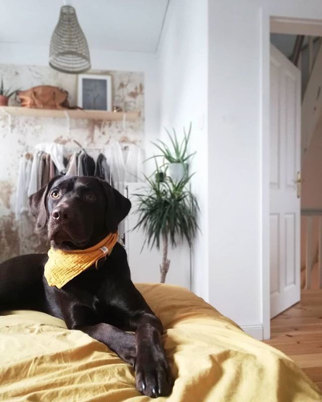 Mustard Suits Everyone And Everything Picture By Altbremerhausmomente On Instagram Instagram Pictures Labrador Retriever