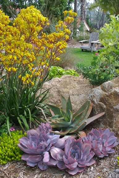succulents & Kangaroo Paw.  like these tones