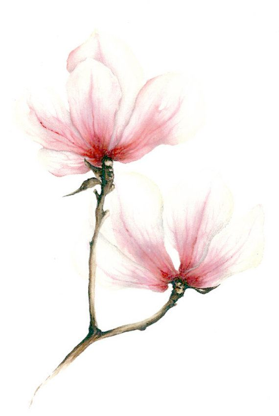 Watercolor illustrations picture  Magnolie by LISIZA on Etsy, $17.99