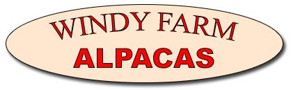 Windy Farm Alpacas FARM OPEN HOUSE WEEKENDS  Saturday & Sunday Sept 27 & 28, 2014, 10:00 AM to 5:00 PM in Chesterfield NJ.  Alpacas For Sale! Shop Alpaca Products, Yarn & Fleece, Visit the Alpacas ! Observe a Hand Spinner... a fun 1-hr visit.