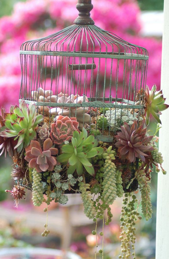 succulents in an old bird cage