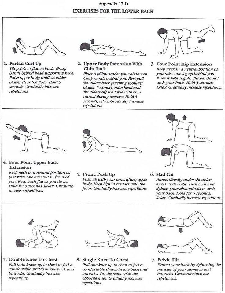 Great little diagram illustrating popular lower back exercises!