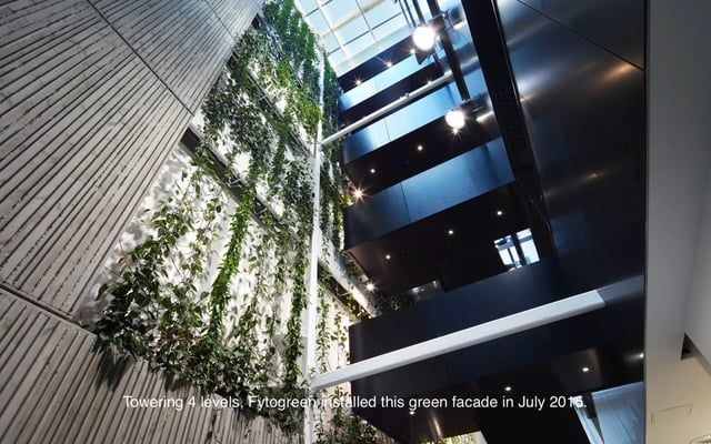 Fytogreen, together with GreenAir, provided a new commercial building in Christchurch with New Zealand's largest indoor green facade in July 2015.  Two years on, the facade towers up 4 levels in the atrium area of the six-story office building and is looking amazing.