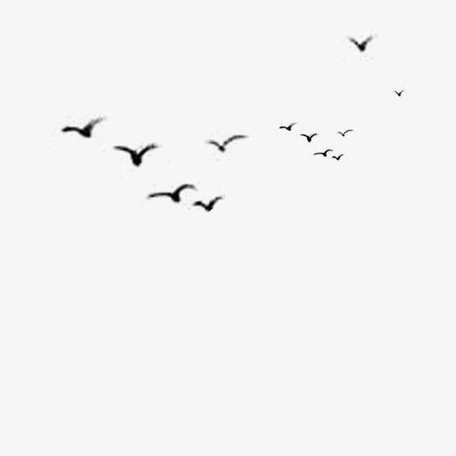 Bird Bird Circle Logo Design Birds In The Sky