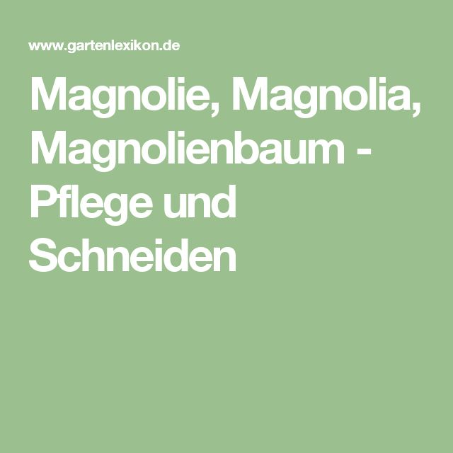 Magnolie, Magnolia, Magnolienbaum - Pflege und Schneiden