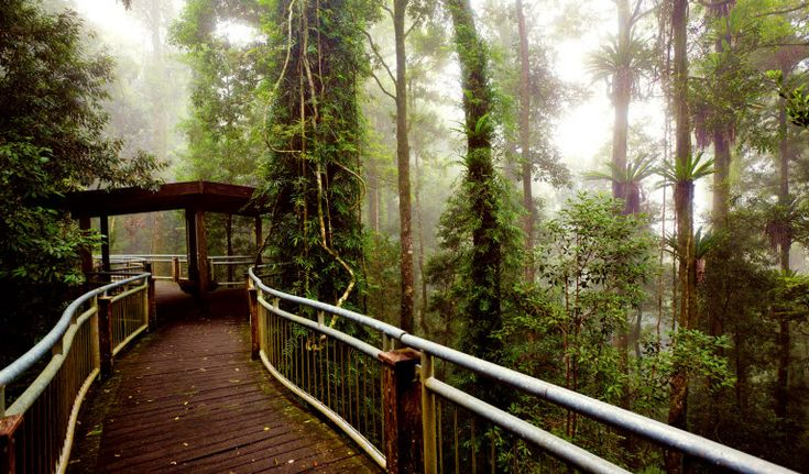 Dorrigo National Park- 30 types of mammals, more than 128 kinds of birds and 44 species of amphibians and reptiles.