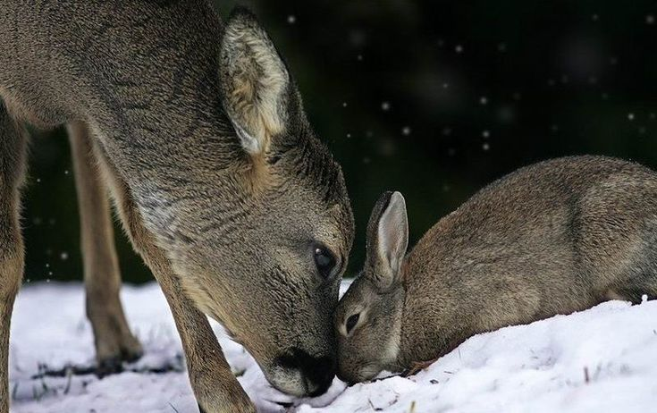 Bambi and Thumper do exist