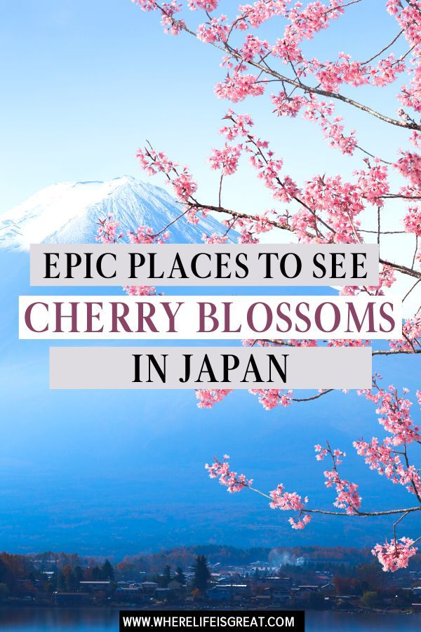 The Ultimate Guide To Cherry Blossom In Japan Cherry Blossom Japan Japan Travel Japan Travel Guide