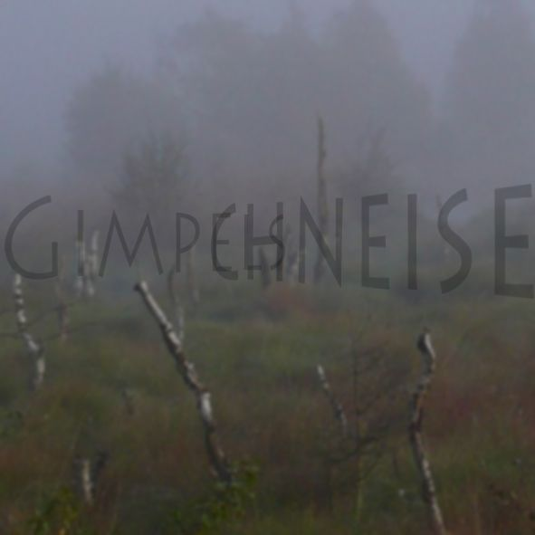 Pastior-Gimpelschneise in die Winterreise-Texte von Wilhelm Müller