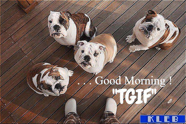 Good Morning! @tomm2kim  #allenglishbulldogs #theenglishbulldogs #pinterest #englishbulldogs #englishbulldogsofig https://t.co/ZVX6Em8UgI