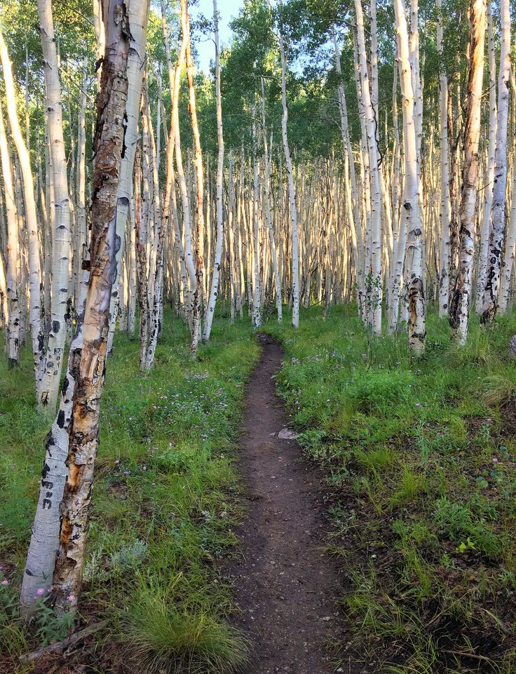 Sometimes You Can See Where The Trail Will Lead And Have To Faith Picked Right Start Brent M Jones Follow THOUGHTS TO PONDER