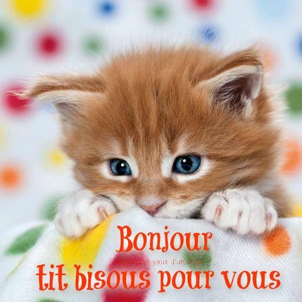 Bonjour, tit bisous pour vous #mardi chat chaton bisous mignon