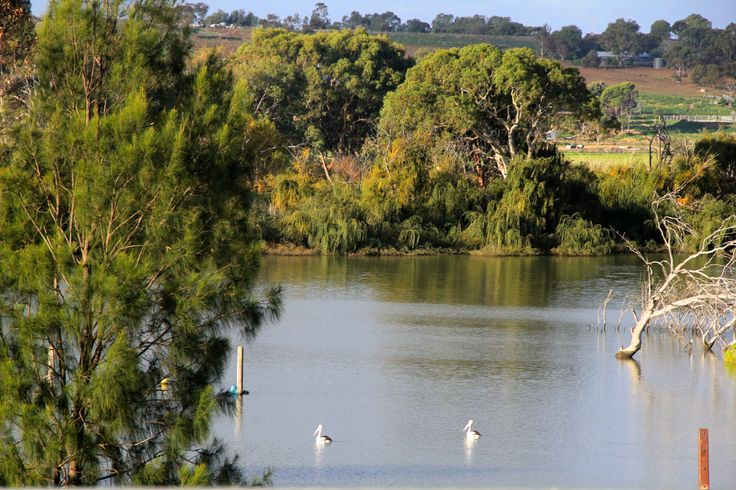 Visit www.mrri.com.au for more information about rowing on the spectacular Murray River in South Australia!