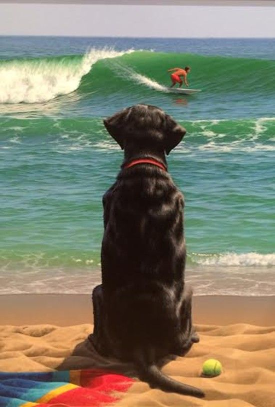 Forrest Rodts - Dog is Patiently Waiting