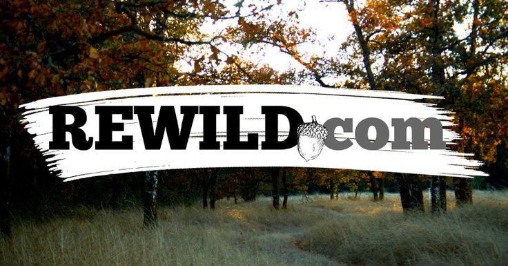 Rewild. v. To reverse the process of domestication. 2. To return to a more wild or self-willed state.