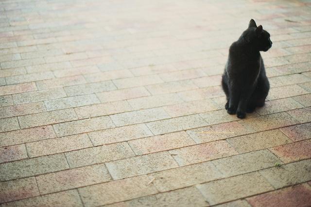 a catPhotos, Cat, Photography