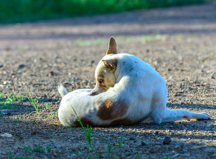 1000+ ideer om Hund Würmer på Pinterest Würmer bei hunden - würmer in der küche