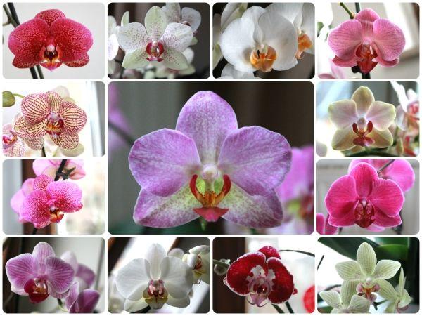 Ein Teil meiner Orchideen <3