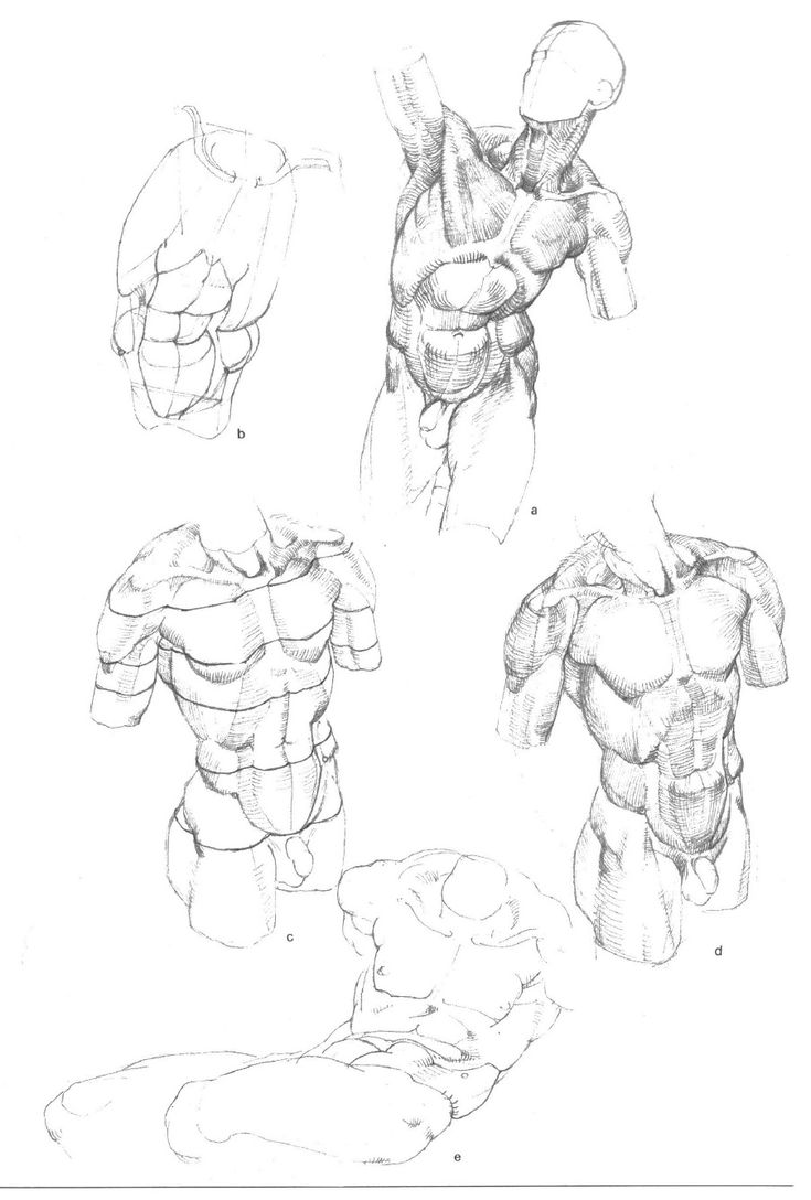 19 best BAMMES images on Pinterest | Drawing reference, Human ...