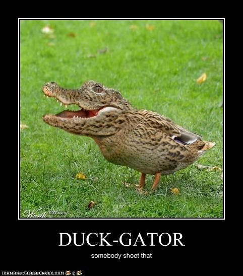 17 Best Images About Funny Ducks On Pinterest   Military ...