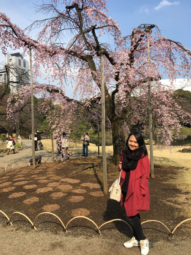 Cherry blossoms   #cherryblossom #japan