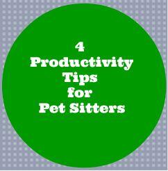 4 Pet Sitting Business Building Productivity Tips