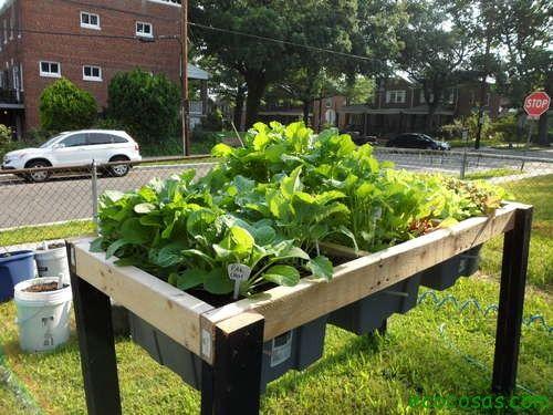 Comment construire un système d'auto-irrigation pour l'été: Voulez-vous assurer un #arrosage correct pour vos #plantes même quand vous n'êtes pas là? Si vous avez des plantes à la #maison et vous allez partir en #vacances, la meilleure option est de choisir un système d'irrigation. Nous vous présentons tout de suite un kit d'arrosage pour pots de #fleurs. #Diy   #inspiration   #bricolage   #astuces http://fr.tools4pro.com