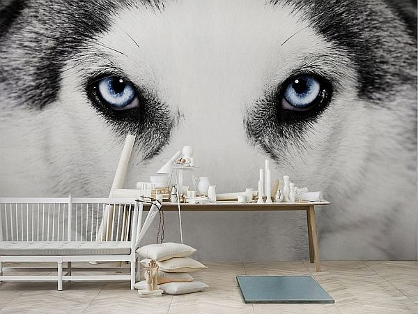 Awesome wolf eye wallpaper. Learn more about creative wallpaper here: http://prolabdigital.com/products-services/fine-art-digital-prints/wall-murals-wallpapers.html