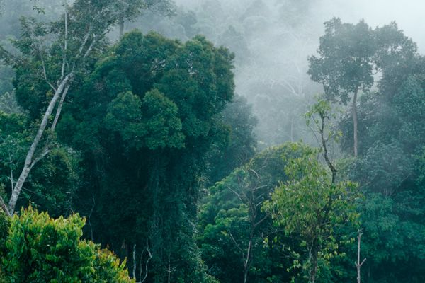 Early morning misty view of the forest of East Kalimantan, Indonesia, Borneo. © Mark Godfrey/TNC Slide show on this website.