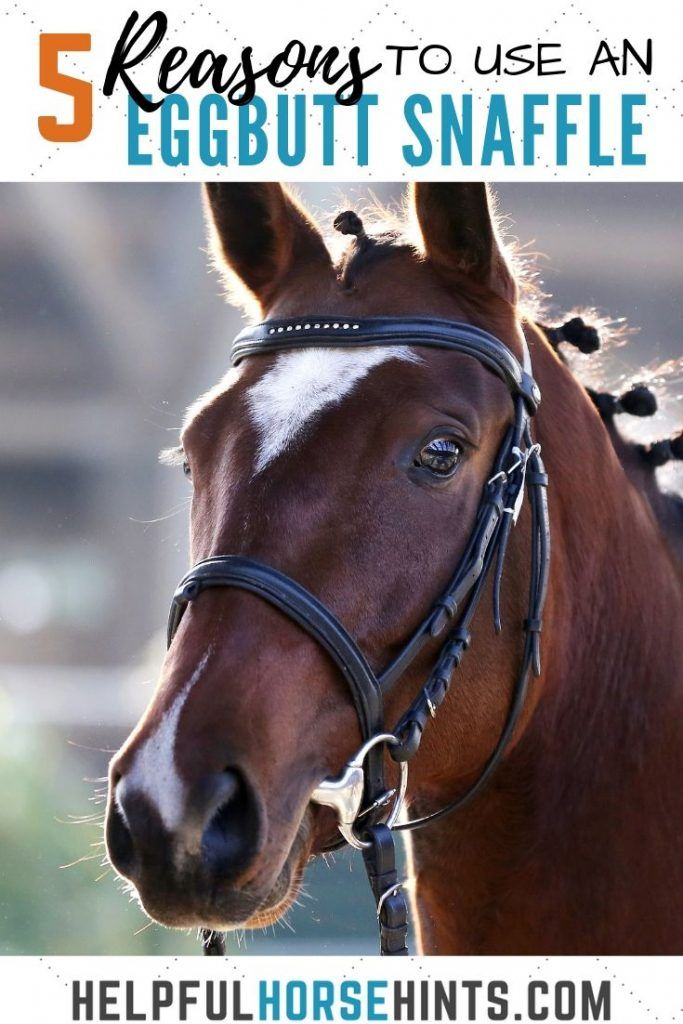 5 Compelling Reasons to Use an Eggbutt Snaffle   Equestrian